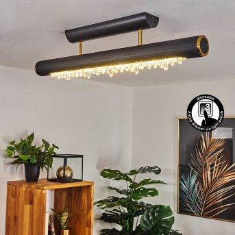 Rodeche Deckenleuchte LED Messing, Schwarz, 1-flammig